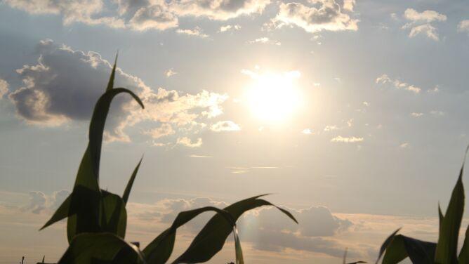 Pogoda na dziś: wszędzie dużo słońca, do 23 stopni