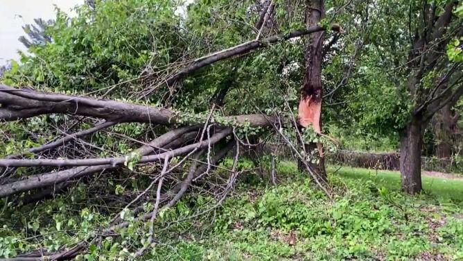 """Drzewa powalone na drogę, przerwy w dostawie prądu. """"Naprawdę niebezpieczna sytuacja"""""""