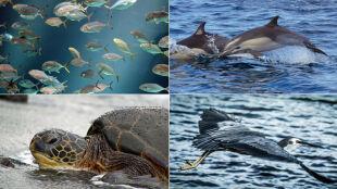 Zwierząt w morzach coraz mniej. Populacja drastycznie spada