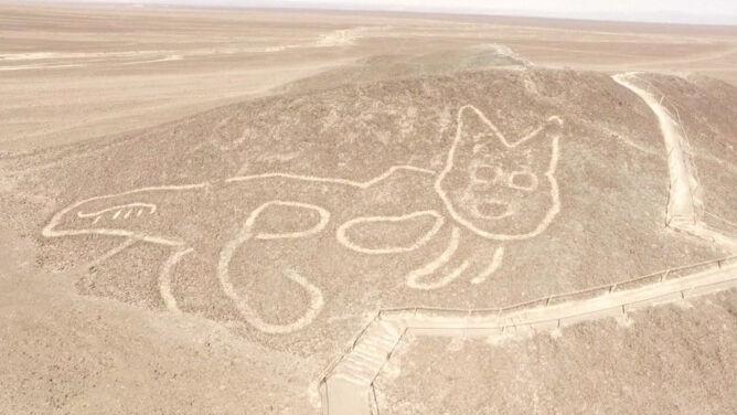 Odkryli gigantyczny rysunek kota na peruwiańskim wzgórzu
