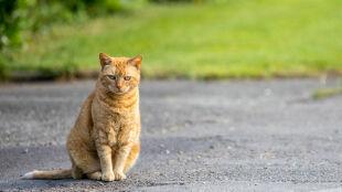 """Właścicielowi umiera kot, kolejnego mieć już nie może. """"To brzmi radykalnie"""""""
