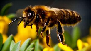 Zimno daje się we znaki pszczelarzom