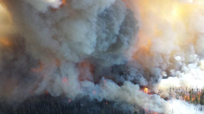 Płuca Ziemi w ogniu. Największa katastrofa ekologiczna XXI wieku